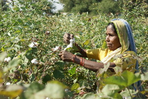 Cotton revolution - A novel planting technique can reduce crop losses in unirrigated areas