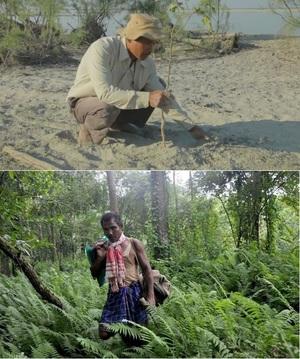 Jadav Payeng - the man who planted nearly 1400 acres of forest