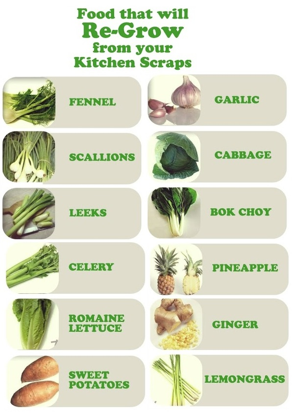 16 Foods That'll Re-Grow from Kitchen Scraps via @joinwakeupworld
