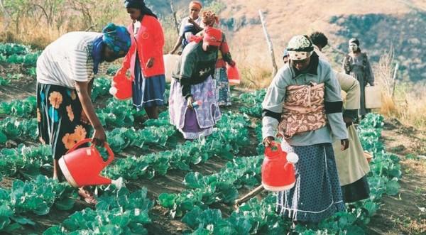 savoryinstitute.com   Healing the Grasslands, Rangelands and Savannas of the World.