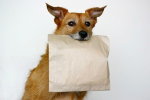 """The ideal reusable """"doggie bag"""" might not be a bag at all via @wehatetowaste"""