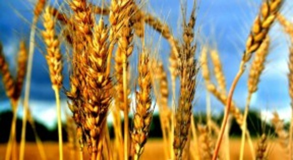 Climate Change Series: The Future Of Food