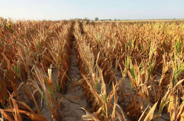 How the Drought of 2012 Will Make Your Food More Expensive - Stop Food waste