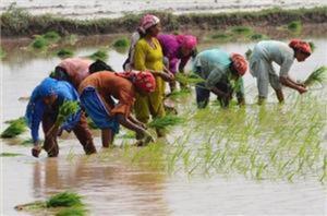Pakistan farmers grapple with climate change via @AJEnglish