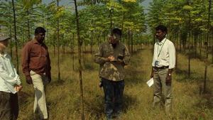 1 million trees raised in 5 districts | The Hindu