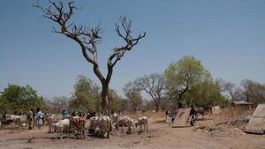 Struggling to force the Sahara back as climate change wreaks havoc in Senegal via @IrishTimes