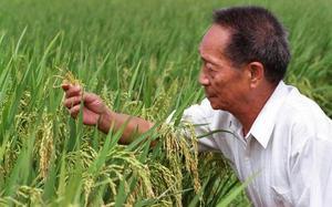 Fine people who waste food, says pioneering rice scientist