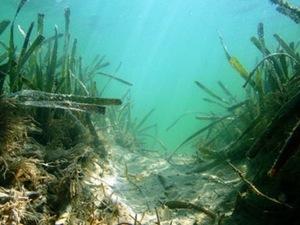 Innovative Solution of Blue Carbon Helps Ocean Wildlife