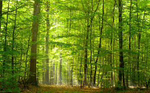 Plants can moderate climate warming, new research shows via ScienceDaily