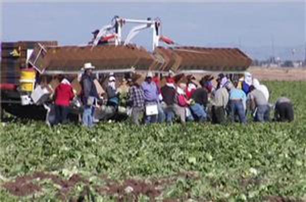 Climate change reduces US food production | Al Jazeera English