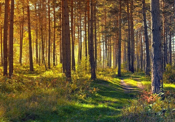 How to Moderate Climate Change: Plant More Trees to Avoid Warming