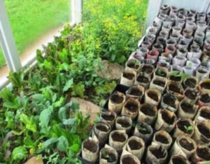 Make Seed Pots From Recycled Newspapers - MOTHER EARTH NEWS