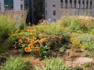 Sustainable landscaping is eco-friendly and less work - DailyHerald