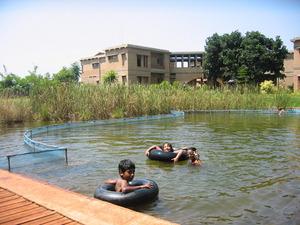 A swimming pool that is cleaned using aquatic plants!