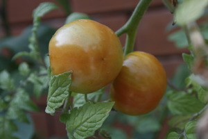 Grow vegetables instead of ornamental plants