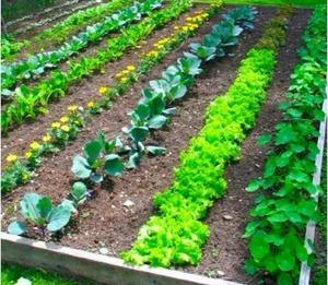 Gardeners Turn Food Waste Into Food Plenty via @Forbes