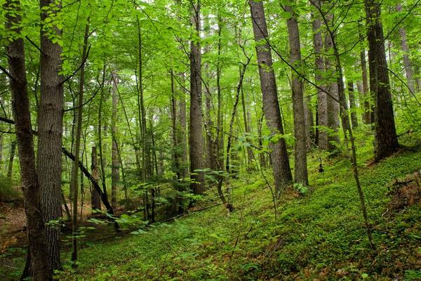 Helping Forests Gain Ground On Climate Change via sciencedaily