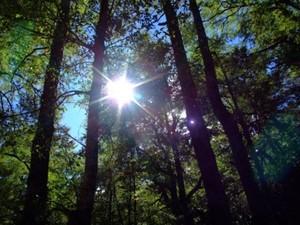 Green Building 101: Using Solar Energy For Renewable Power