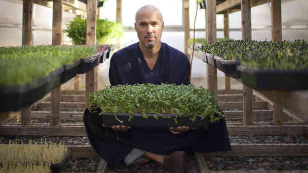 Introducing Microgreens: Younger, And Maybe More Nutritious, Vegetables