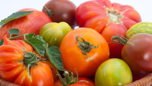Organic tomatoes have more vitamin C