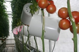 Want Healthier Tomatoes? Grow 'Em With LEDs | EarthTechling
