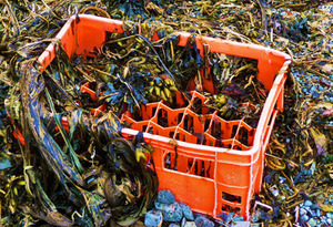 For ocean critters, plastic packs double whammy | Futurity.org