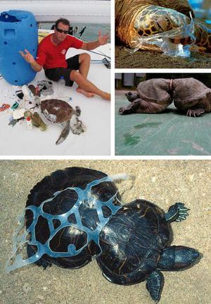 Ph.D. Student Planning Map of Plastic Debris in Ocean - Trash Talk