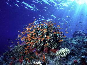 Oceans | Habitats | WWF