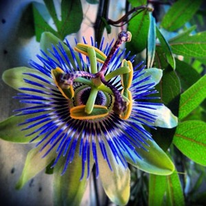 #mybalcony #home #house #flower #flowers #garden #gardening #green #ecology #blu #blue #colours
