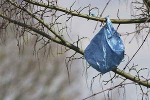 Report: Plastic-Bag Recycling Doesn't Work