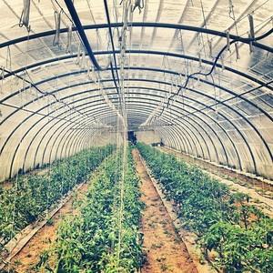 Greenhouse glory. Farm visit! #kale #green #organic #bio #paris