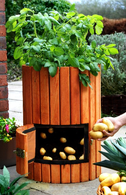 How to grow Grow 100 pounds of potatoes in 4 steps