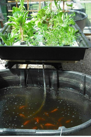 UN Introduces Aquaponics to Urban Farming in Gaza
