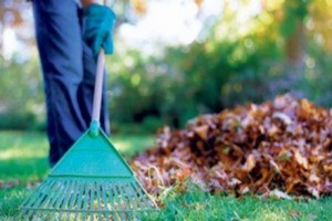 Useful Organic Gardening Tools - The Green Home