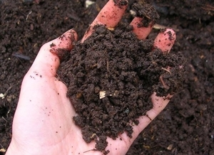 Plant Food for Your Garden: How to Make Layered Compost via @organicauthorit