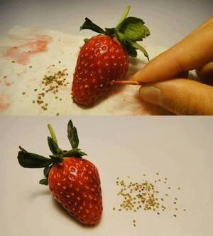 Save Organic/Local Strawberry Seeds & Plant! #DIY