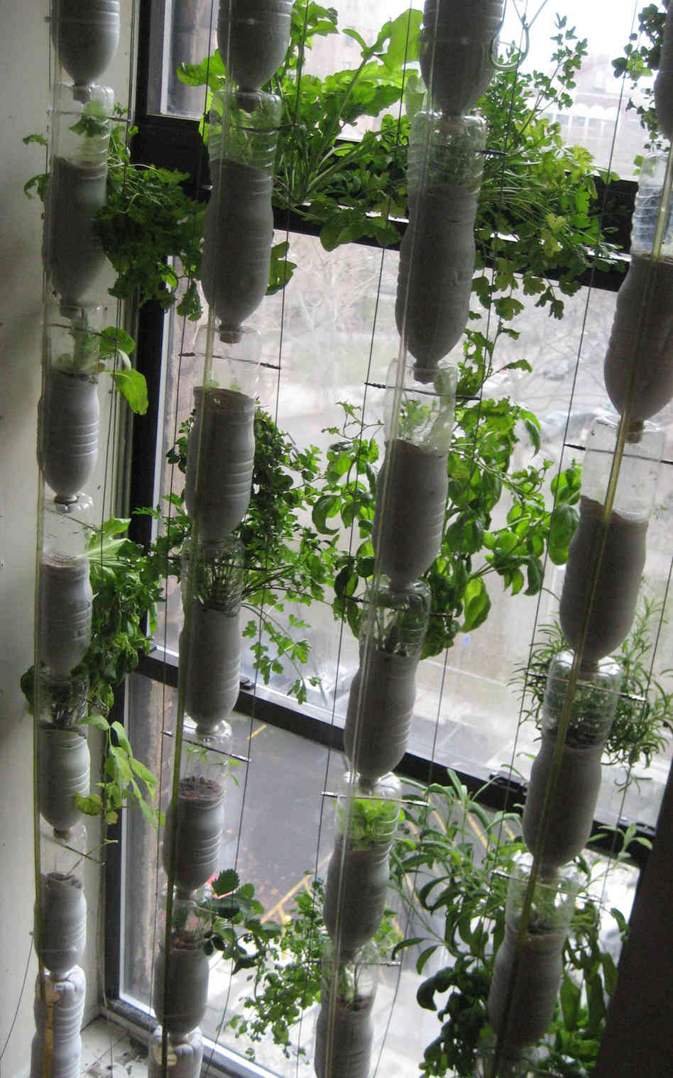 Window Farming: A Do-It-Yourself Veggie Venture