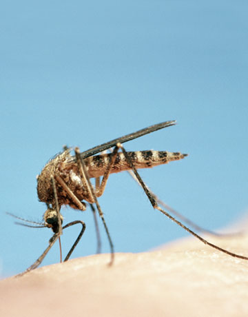 Natural Insect Repellents via @the_daily_green