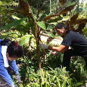 #Weeding #gardening #kecharaforestretreat