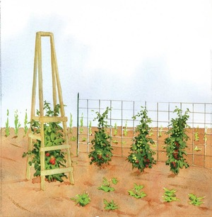The Best Homemade Tomato Cages