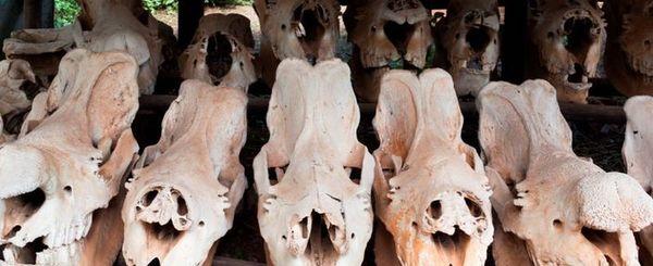 Rhino Conservation - Save the Rhino