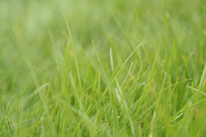 Easy Organic Lawn Care via @NRDC