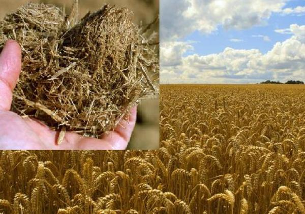 Sustainable wood-free paper made from wheat straw and other agricultural waste (bagasse)