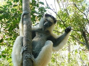 Ecotourism offers hope in Madagascar