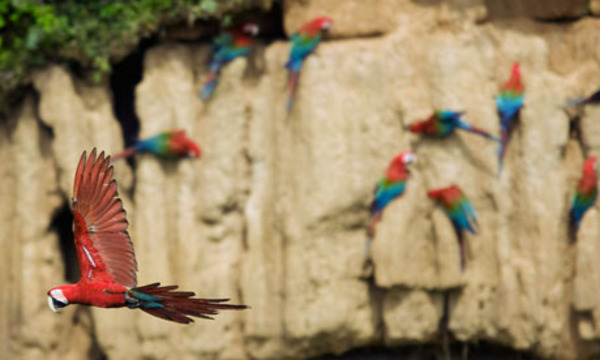 #Ecotourism in Peru: community engagement and preserving biodiversity
