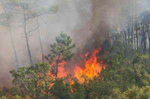 Climate change and wildfire via Sciencedaily