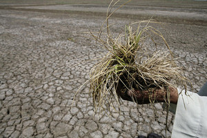 Global Hunger to Rise with Global Temperatures, Oxfam Report Suggests