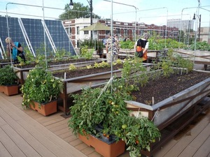 Uncommon Ground - Green Restaurant with an Organic Roof Top Farm