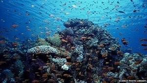 Health of oceans 'declining fast' via BBC News