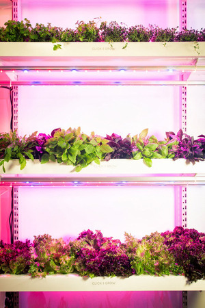 Urban Gardens -Click n' Grow, the smart planter